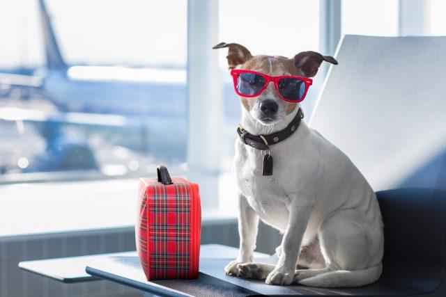 भारत का पहला 'पेट डॉग्स' का 5 – स्टार होटल, जहां इंसानों को नहीं सिर्फ कुत्तों को मिलती है एंट्री !